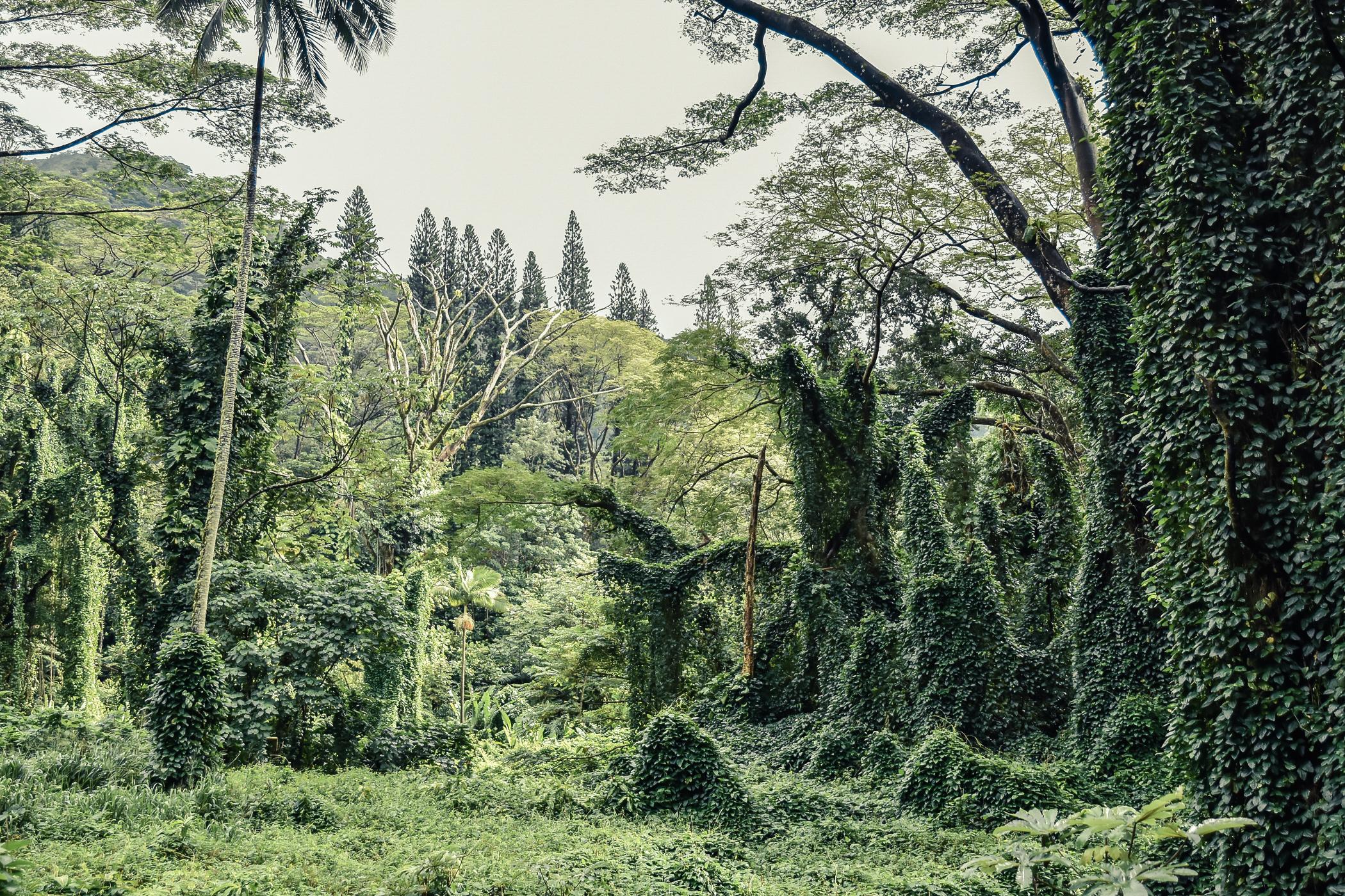 12-el-blog-de-silvia-viaje-hawaii-oahu